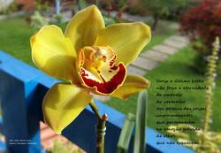poema para Jeck 2.jpg