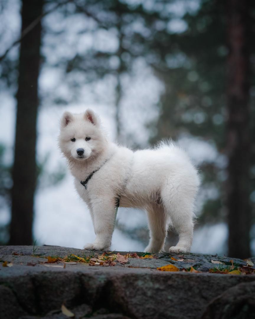 Dog Photography Awards-3.jpg