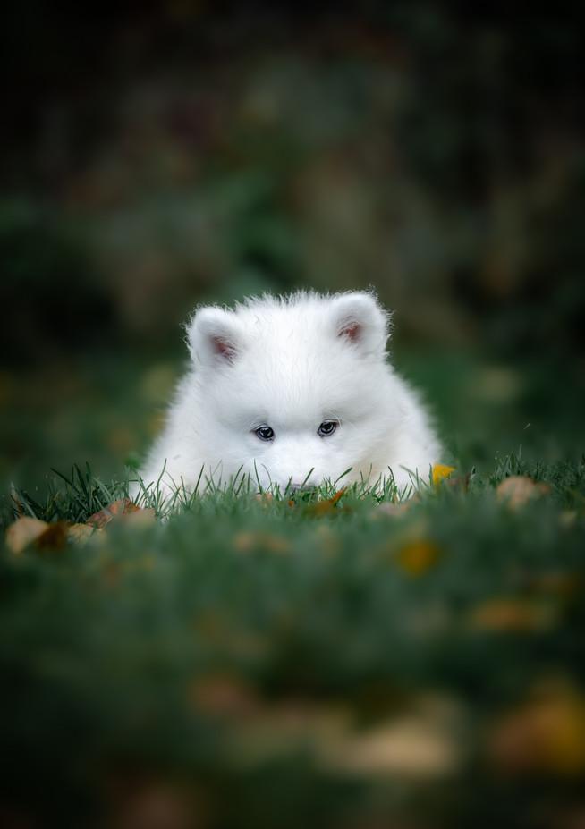 Mr Teal Arctic Fox.jpg