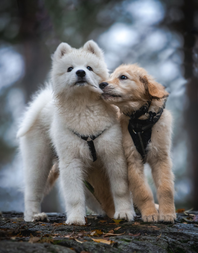 Kaliko and Lucy.jpg