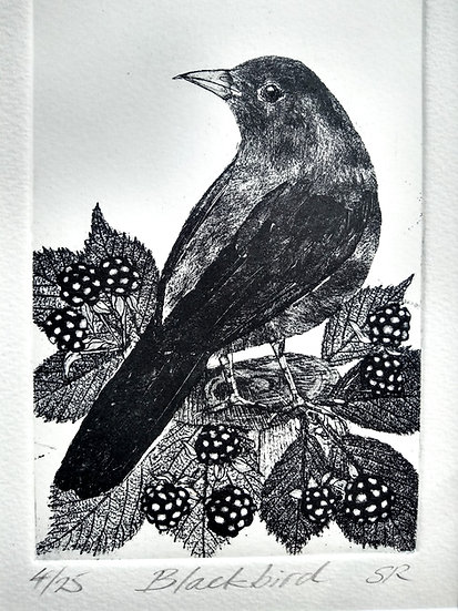 Blackbird Etching