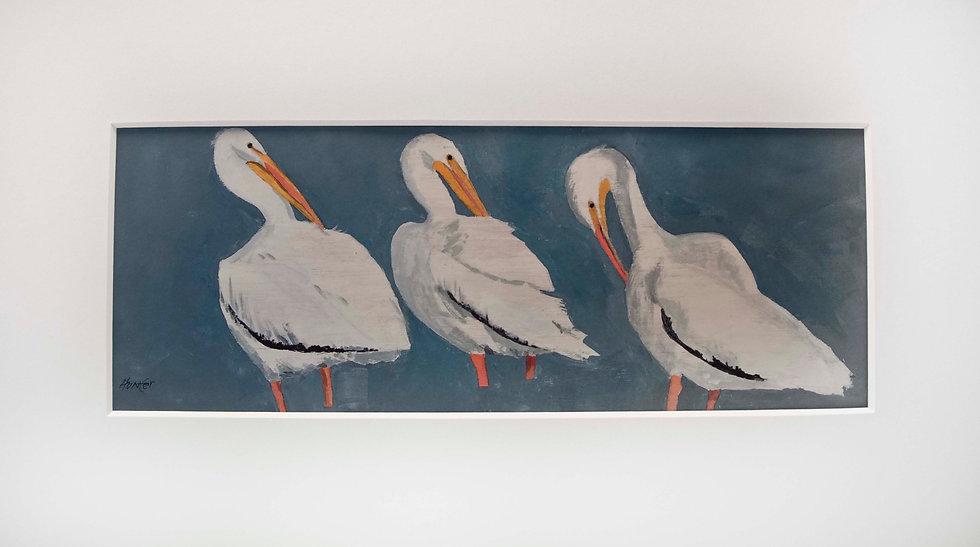 African Pelicans