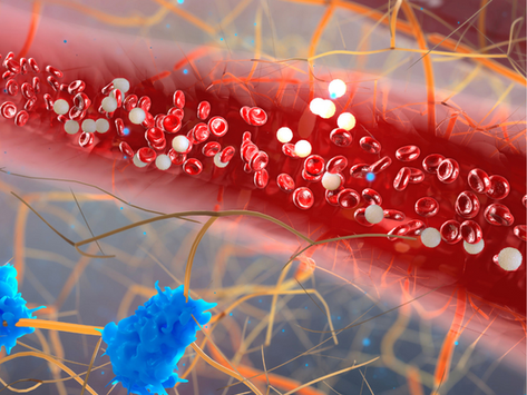 Gut Link: SIBO and Vascular Disease