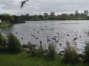 duddingston loch wild birds arthur seat edinburgh