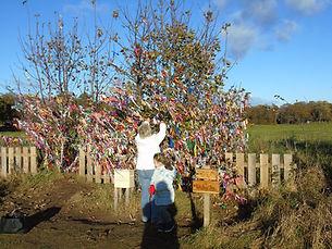 Wishing Tree Willow Walf Archerfield Walled Garden Est Lothian
