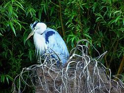 Figgate Park Wild Life Portobello Edinburgh