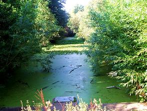 Cammo Estate Canal Nature Reserve