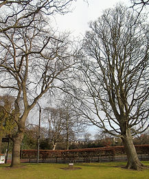 Edward and Alexandra Trees 1902 Haddington East Lothian