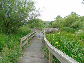 Walkway over Figgate Pond