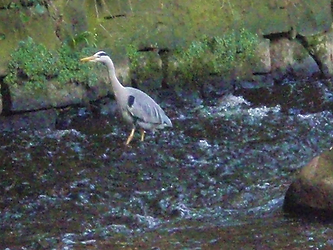 WATER OF LEITH WILDLIFE