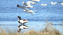 Aberlady Bay Bird Sanctuary East Lothian
