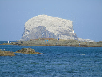 Bass Rock Island Tours East Lothian Scot