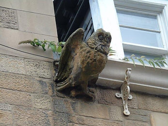 Owl scaring birds away on high in Cockburn Street