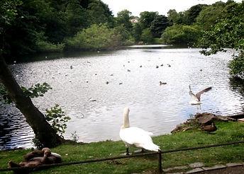 Blackord Pond Blackford Hills Edinburgh