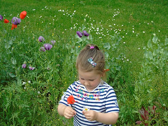 Wild Flowers in Figgate Park