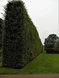 Beech Hedge Royal Botanic Gardens Edinburgh