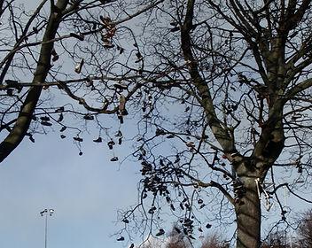 The Shoe Tree at the Skateboarders Park Saughton Edinburgh
