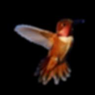 thundermountaintea hummingbird 2