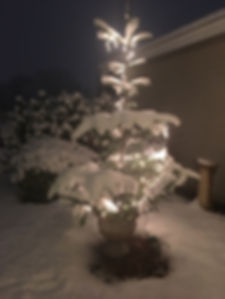 tree outside in the snow.JPG