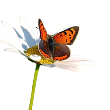 my butterfly.png