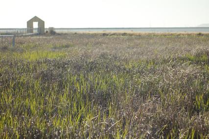 Alviso Bay. 2013