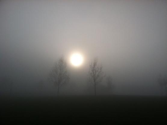 Fog Rise. 2012