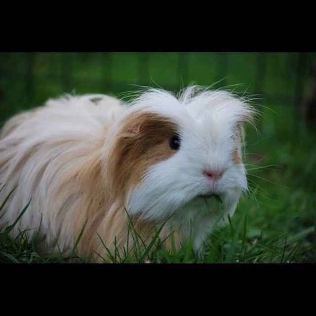 general guinea pig care? We're currently doing a Q&A on our blog before we p