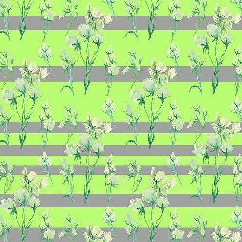 White Rose stripes