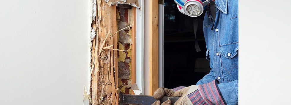 Termite and Moisture Inspection
