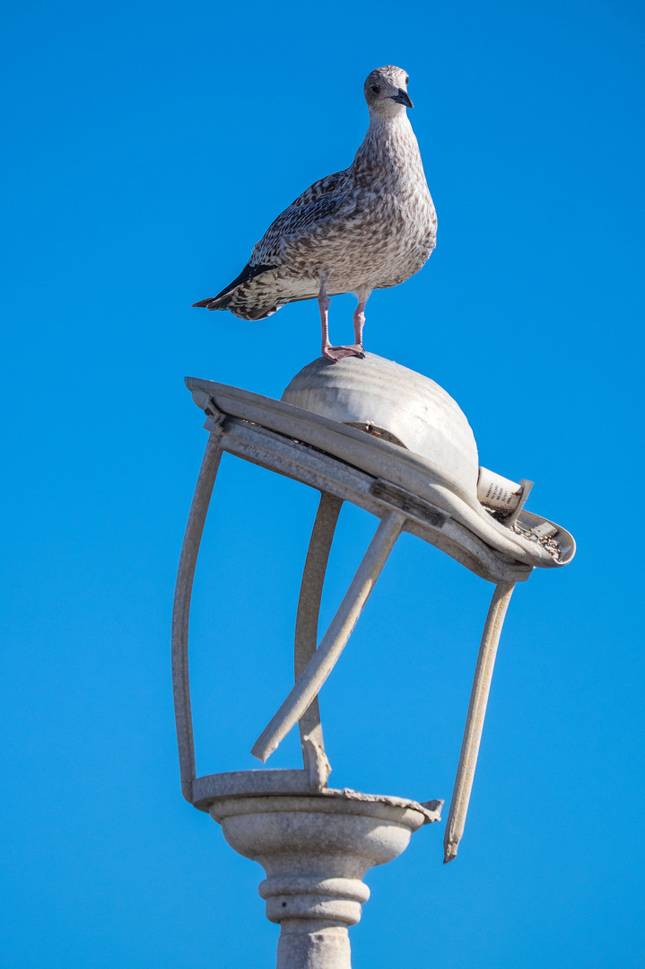 Bird on a broken lamp
