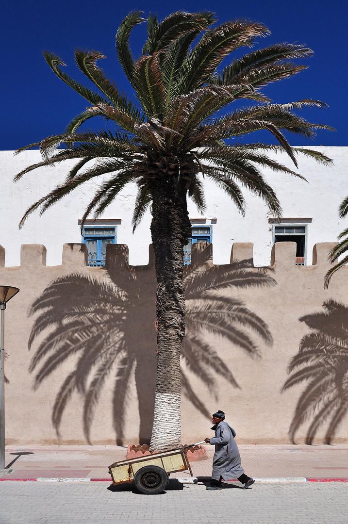 Palm sun day
