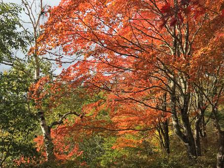 横谷観音展望台紅葉始まりました