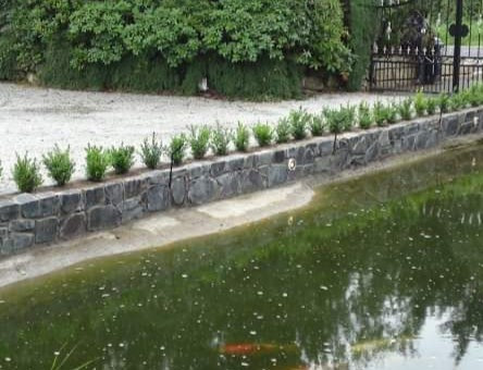 Double skinned quarry stone built wall. Privet hedging added to protect the large fish pond.