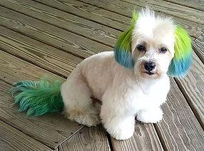 doggie hair dye
