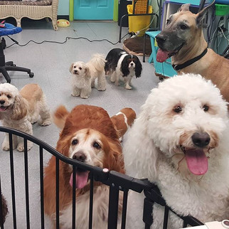 Happy sunday!!! #dogsofinstagram #cagefr