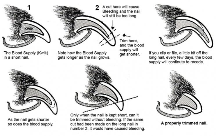 nail diagram.png