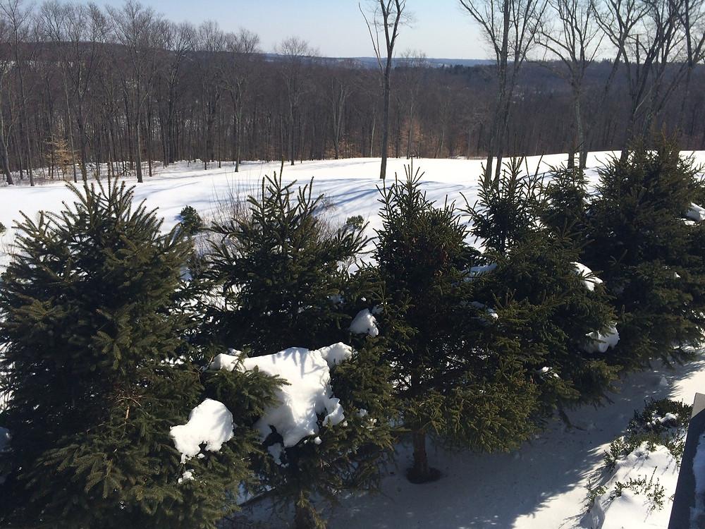 tree-winter.JPG