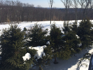 Winter Landscaping & Lawn Care Tips   Southbury, CT