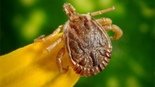 Powassan Virus - Tick Spray & Removal - Fairfield & New Haven County, CT