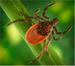 Brookfield, CT - Organic & Traditional Tick Spray Control Services