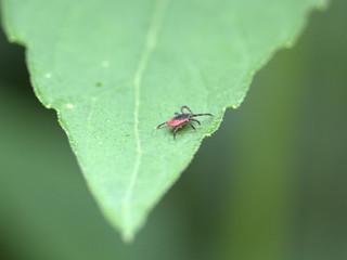 Organic Tick Control CT - Tick Spraying & Prevention | Ridgefield, Danbury, CT