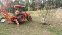 Tree Care and Installation Services | Southbury, CT