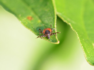 Warm Winter May Bring More Lyme Disease, Ticks to Connecticut