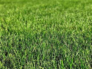 Best Lawn Care and Landscape Maintenance Services - Newtown, Brookfield, CT