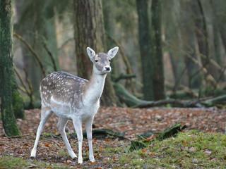 DeerPro Spring and Summer Deer Repellent Services - Fairfield, Southbury