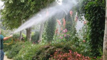 Dormant Oil Spray Services - Tree and Plant Pest Prevention | Fairfield, New Haven County, Connectic