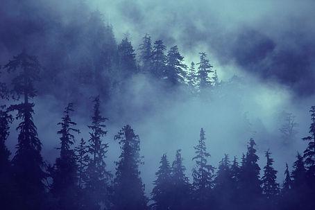 Gruliette : Foret & Environnement gestes écologiques