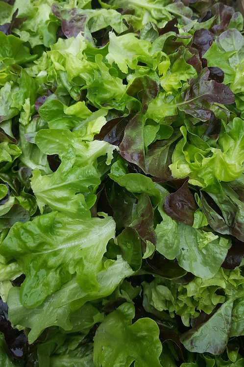Lettuce Mix by the Half Pound