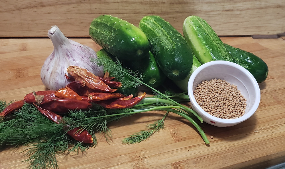 Ingredients for refrigerator pickles. From left to right: dill sprigs, dried chile peppers, a head of garlic, six Kirby cucumbers, and a small bowl of mustard seed. End photo ID.