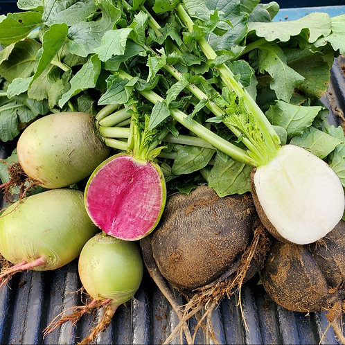 Specialty Radishes by the Pound